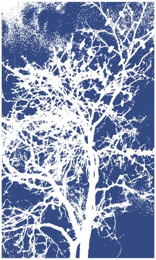 other-crow-tree-2013-negati