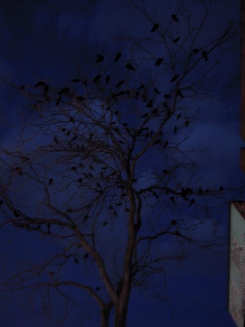 other-crow-tree-original